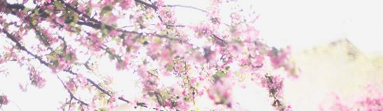 Banner Image of flowers